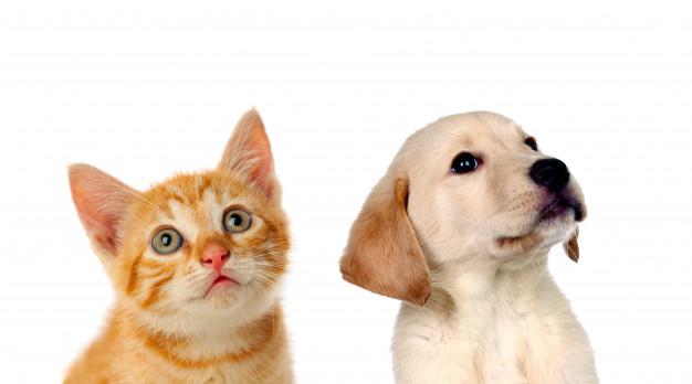 mascotas y bebés